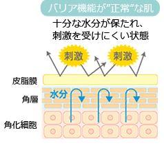 バリア機能が正常な肌