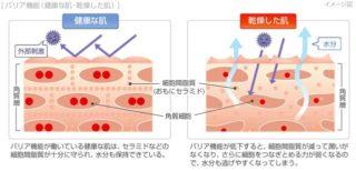 保湿機能が低下した肌