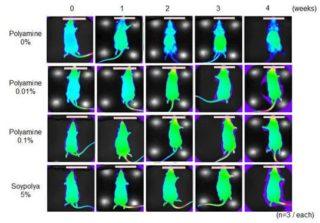 ラットの上皮細胞の活性化実験