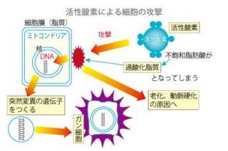 活性酸素による細胞の攻撃
