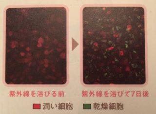 乾燥細胞が増える