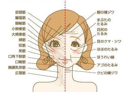 表情筋02