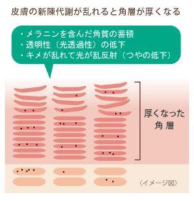 皮膚の新陳代謝が乱れると各層が厚くなる