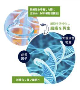 幹細胞培養液