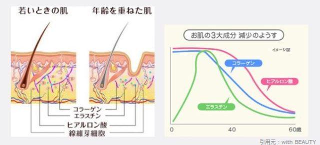 肌の細胞の加齢による減少