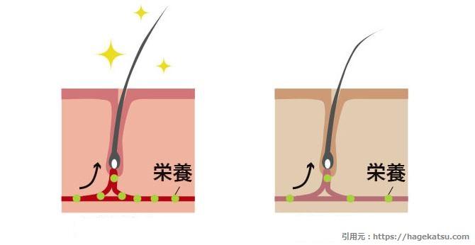 髪の毛に栄養が届く