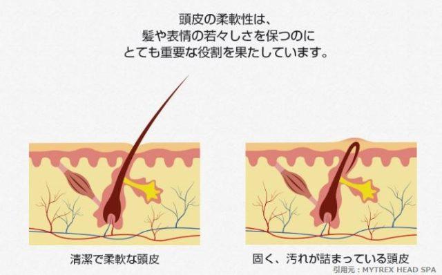 髪_頭皮の柔軟性
