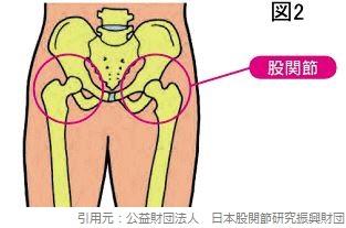 骨盤_股関節